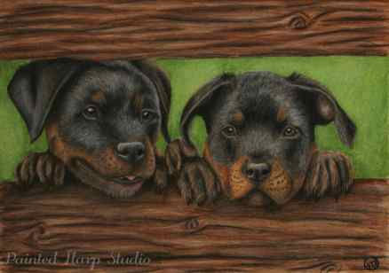 A Pair of Puppies - Sold