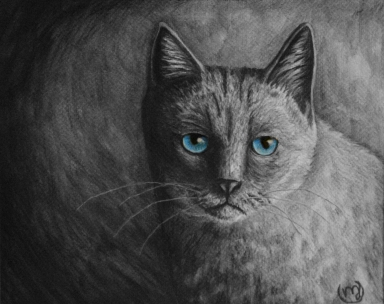 Blue-Eyed Cat (a bit of Coloured Pencil used)