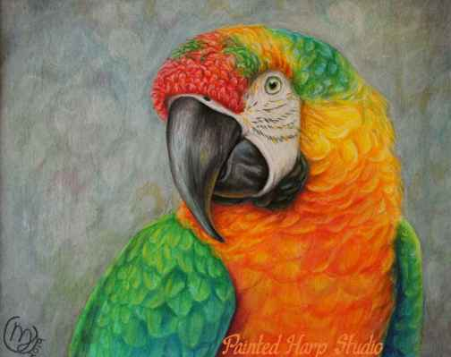 Multi Coloured Macaw