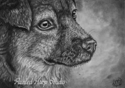 Greyscale Dog
