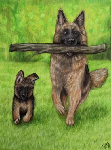 German Shepherds