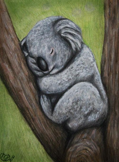 Snuggly Koala - Sold